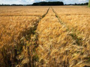 Fortschritt - niemiecki lider maszyn rolniczych
